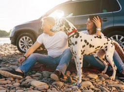 Odmor s ljubimcem: Kako putovati i na kojim ste plažama dobrodošli
