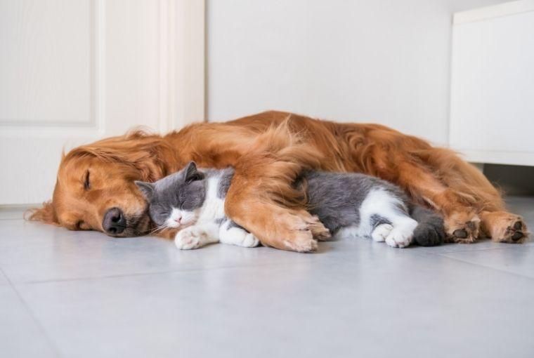 kućni ljubimci, osiguranje kućnih ljubimaca